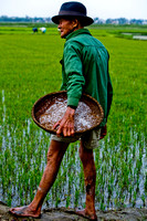 Manual work around ricefields