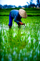 Activities around ricefields