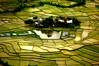 Rice fields patchwork