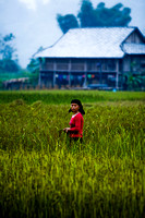 Young worker at ricefields